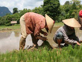 vietnamjeeps-Vientiane to Luang Prabang